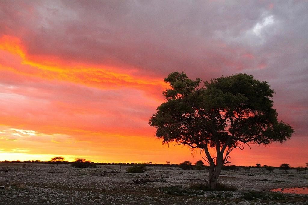 Zdjęcia: Okuaejo, Etosha, Etosha wieczorem, NAMIBIA