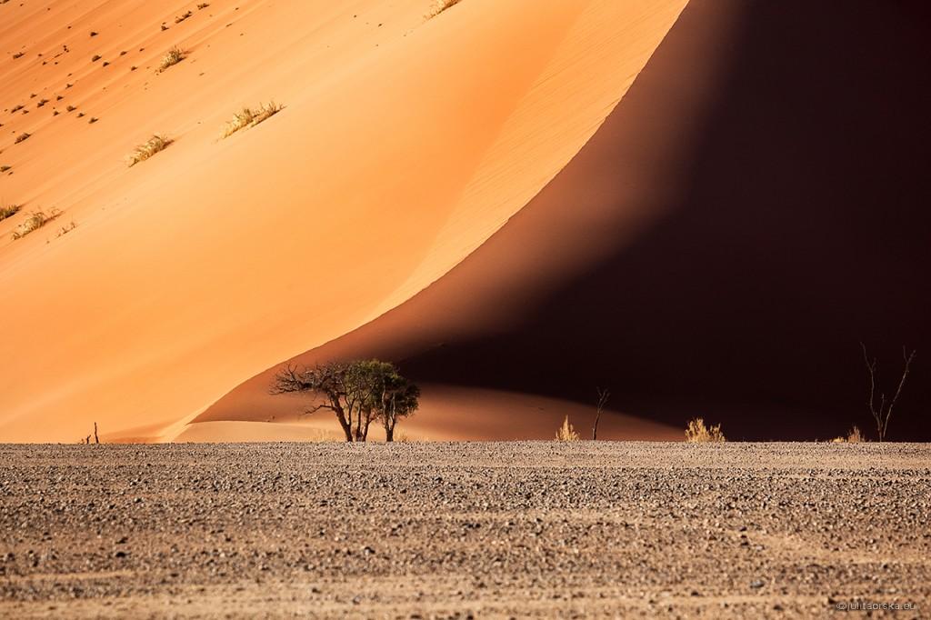 Zdjęcia: Namib-Naukluft, Namib-Naukluft, pustynia Namib, NAMIBIA