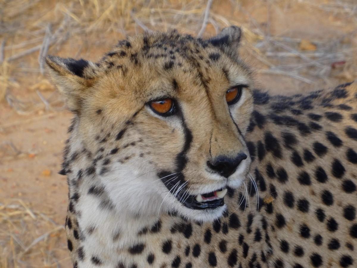 Zdjęcia: rezerwat, Etosha, Mistrz gracji, NAMIBIA