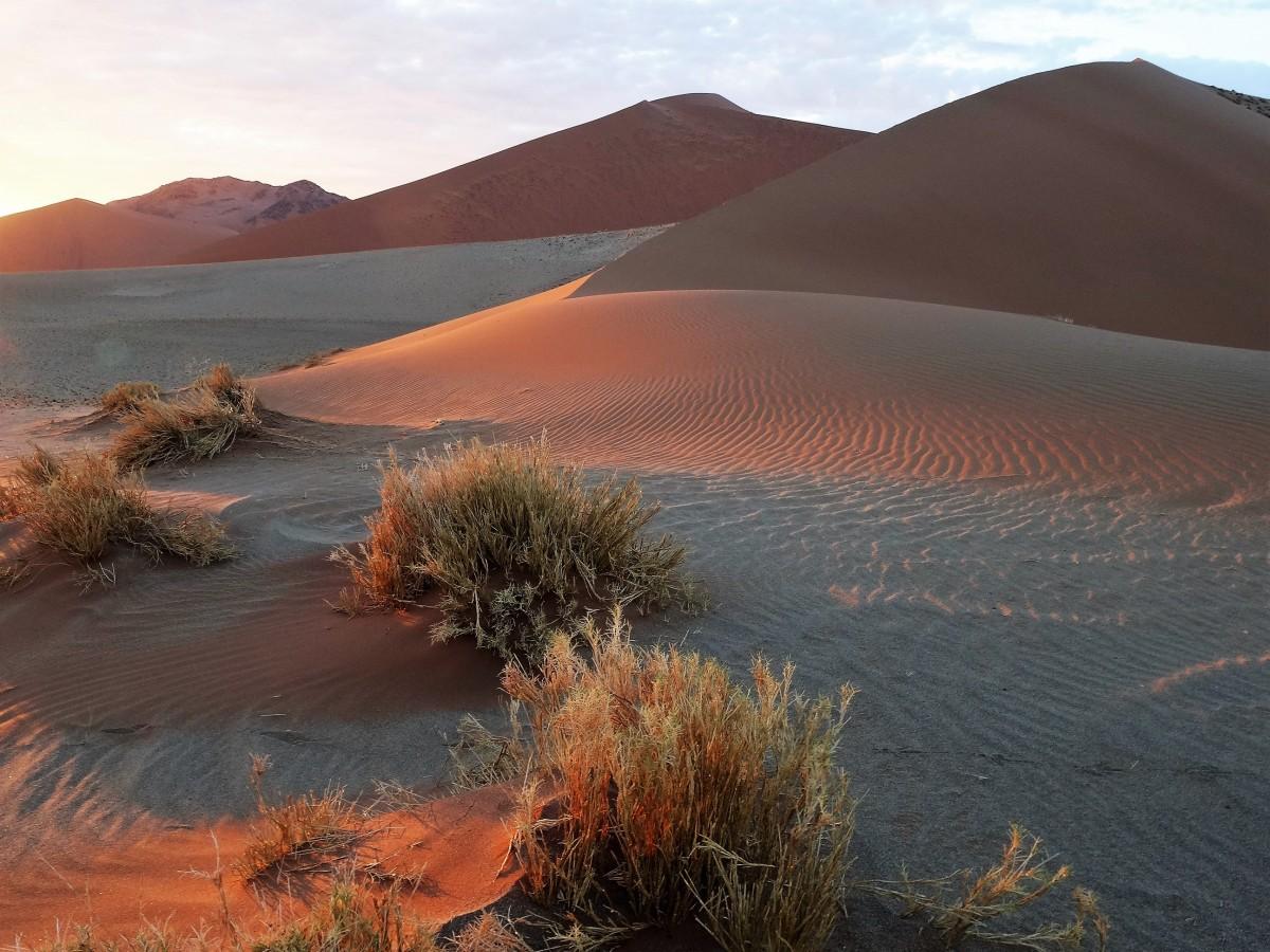 Zdjęcia: Pustynia Namib, Park Narodowy Namib Naukluft, Kolory wschodu, NAMIBIA
