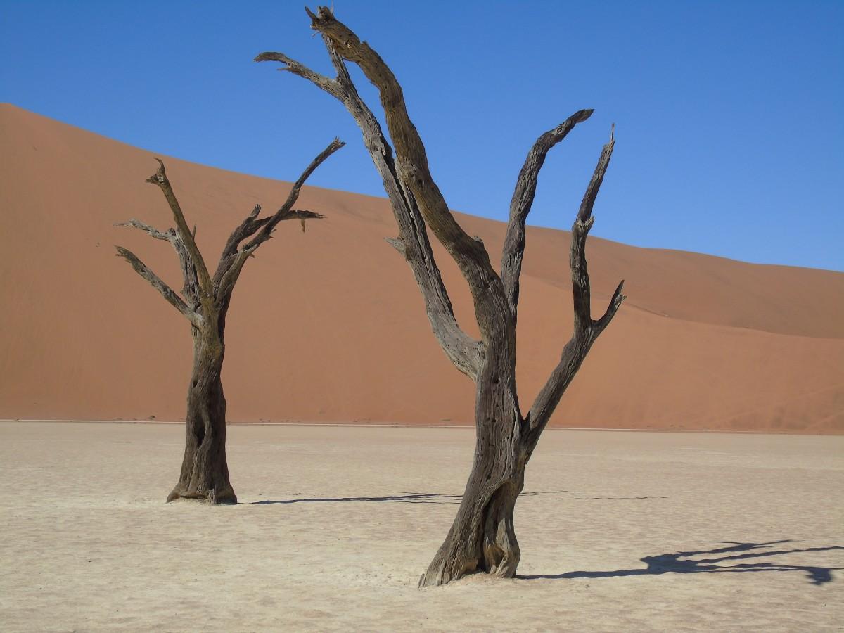 Zdjęcia: Dead Vlei,  Sossusvlei, Dead Vlei, NAMIBIA