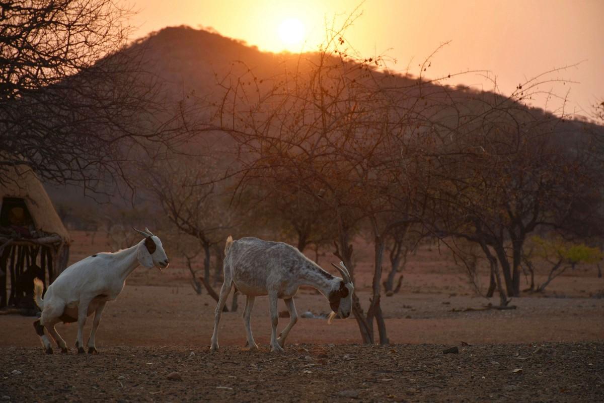 """Zdjęcia: Wioska Himba, Północna Namibia, Po """"zakrapianej """" nocy, NAMIBIA"""