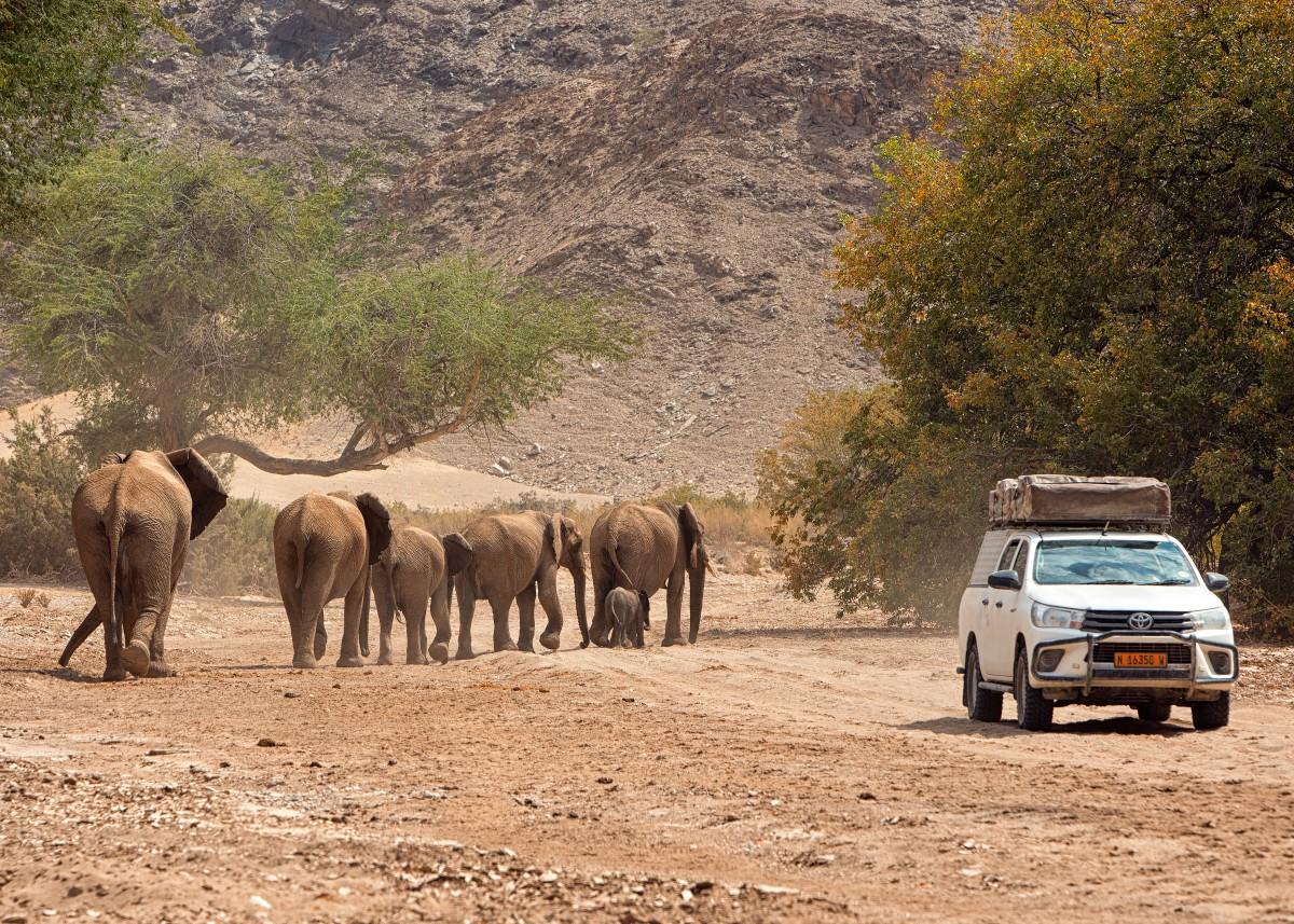 Zdjęcia: Hoanib river, Kaokoland, Namibia, NAMIBIA
