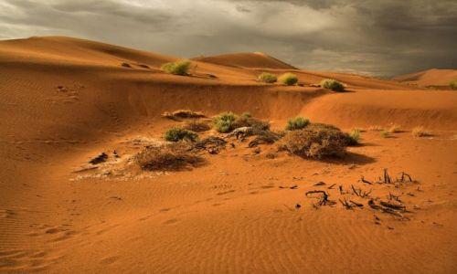 Zdjęcie NAMIBIA / Pustynia Nanib / Park Narodowy Sossuvlei  / Nanib