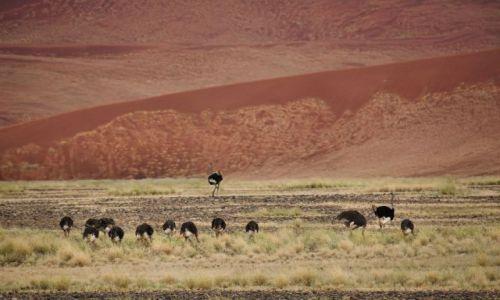 Zdjecie NAMIBIA / Pustynia Nanib / Park Narodowy Sossuvlei  / Nanib