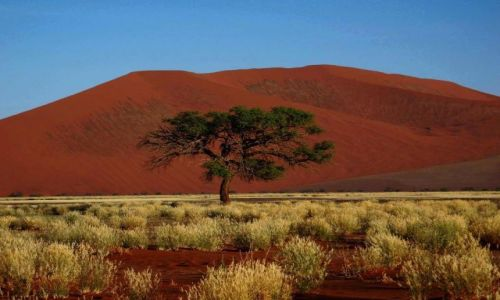 Zdjecie NAMIBIA / - / Namibia / Dune