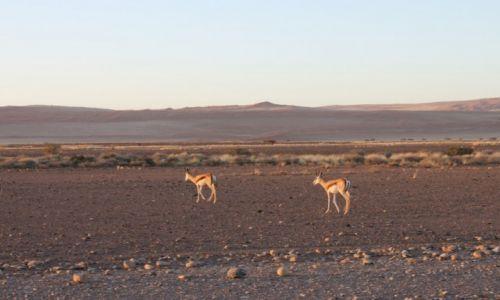 Zdjecie NAMIBIA / Pustynia Namib / Sossusvlei / Pustynia Namib