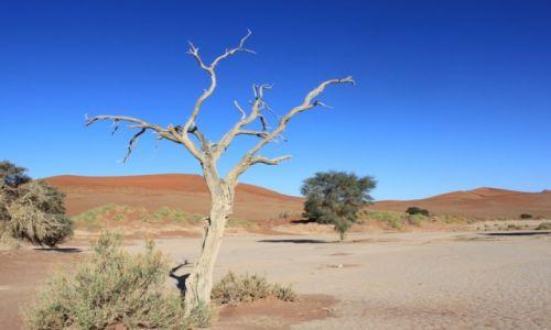 Zdjecie NAMIBIA / Sosussvlei / Deadvlei / Deadvlei IV