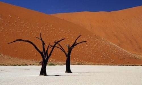 Zdjecie NAMIBIA / Hardap / Dead Vlei / Dead Vlei