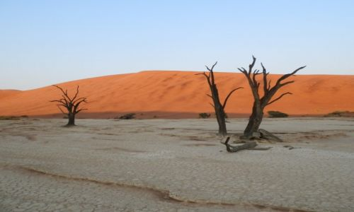 Zdjecie NAMIBIA / Pustynia Namib / Deadvlei / Drzewa umierają stojąc