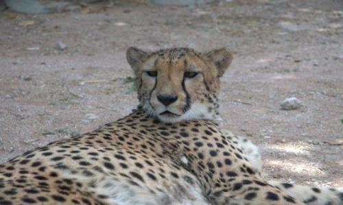Zdjęcie NAMIBIA / - / Środkowa Namibia / Pluszak