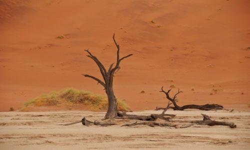 Zdjecie NAMIBIA / - / Dead Vlei / Dead Vlei