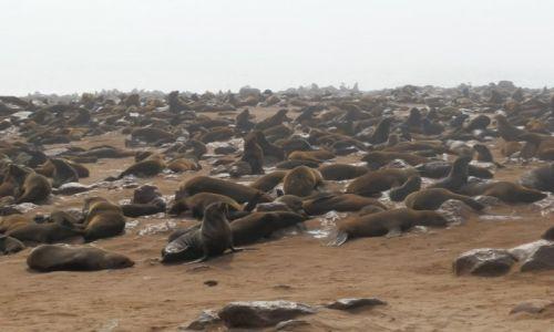 Zdjęcie NAMIBIA / Ocean Atlantycki / Cape Cross / Stado fok