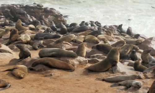 Zdjęcie NAMIBIA / Ocean Atlantycki / Cape Cross / Poleżeć, pomruczeć...