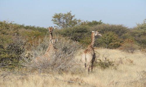 Zdjęcie NAMIBIA / Opuwo / Opuwo / Natura wokół Opuwo