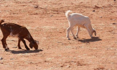 Zdjęcie NAMIBIA / Granica z Angolą / Okolice Epupa / W zagrodzie Himba