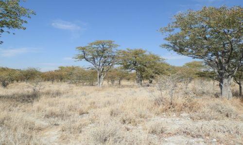 Zdjecie NAMIBIA / Park Etosha / Park Etosha / Krajobraz sawanny