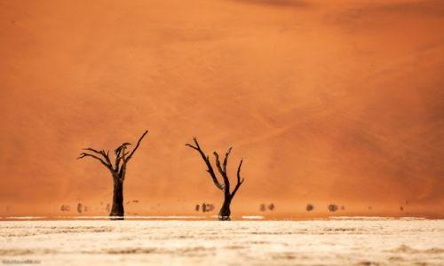 Zdjęcie NAMIBIA / Namib-Naukluft / Namib-Naukluft / pustynia Namib