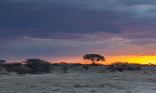Zdjęcie NAMIBIA / Kunene / Etosha National Park / Park Narodowy Etoszy