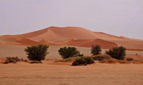 Zdjęcie NAMIBIA / Namib-Naukluft / Namib-Naukluft / Wydmy