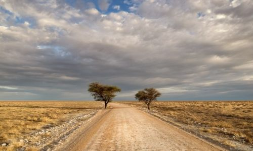 Zdjecie NAMIBIA / Etosha / Etosha National Park / brama do...