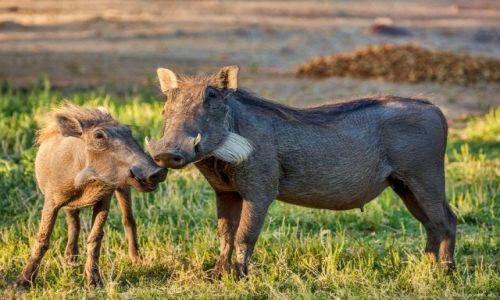 Zdjecie NAMIBIA / Park Narodowy Waterberg / Park Narodowy Waterberg / guźce dla Seni