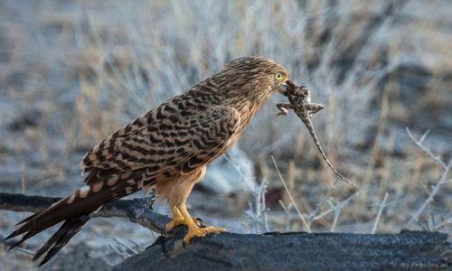 Zdjecie NAMIBIA / Etosha / Etosha National Park / dla Seni