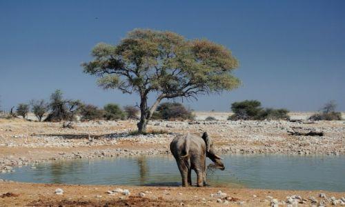 Zdjęcie NAMIBIA / Kunene / Park Narodowy Etosha / U wodopoju