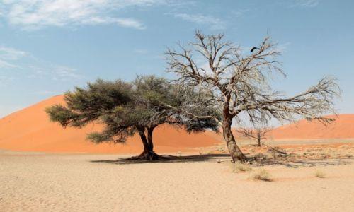 Zdjęcie NAMIBIA / - / Dead Vlei / Czerwone wydmy