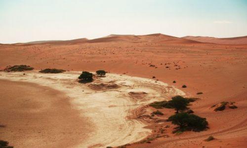Zdjecie NAMIBIA / Sossuslei / Park Narodowy Nukluft / Zieleń pustyni