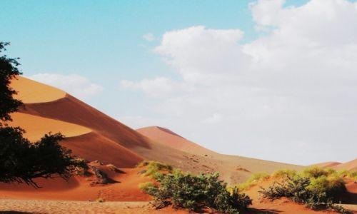 Zdjęcie NAMIBIA / Sossuslei / Park Narodowy Nukluft / Zieleń pustyni