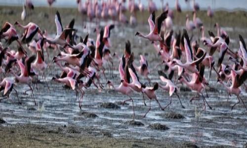 Zdjecie NAMIBIA / Skeleton Coast / Walvis Bay / Flamingi Walvis Bay
