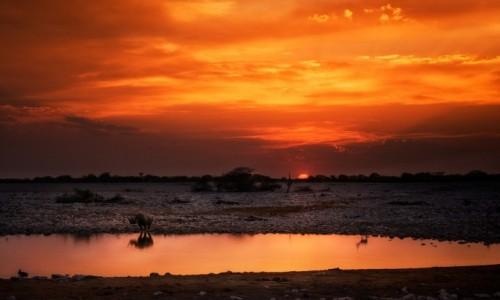 Zdjecie NAMIBIA / Etosha / park / Nocne podglądan