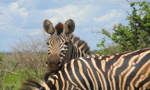 Zdjecie NAMIBIA / pd Namibia / Etosha / bliskie spotkan