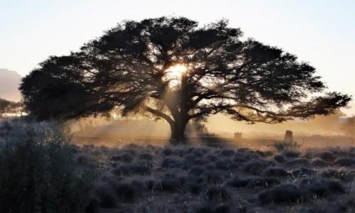 Zdjecie NAMIBIA / namib / Sossusvlei / Krajobraz