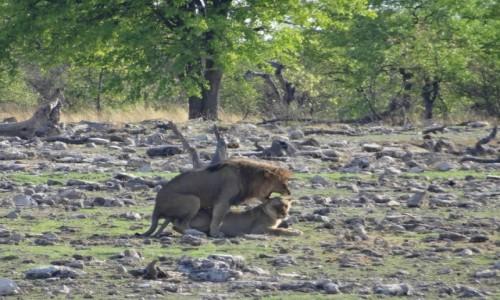 Zdjecie NAMIBIA / Etosha / gdzies na sawannie / Wyglada na zadowoloną...