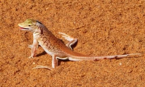 NAMIBIA / Pustynia Namib / okolice Swakopmund / W poszukiwaniu