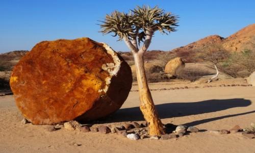 Zdjęcie NAMIBIA / Namibia północna / Gdzieś w okolicy campingu / Drzewko kołczanowe