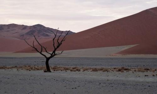 Zdjęcie NAMIBIA / Pustynia Namib / Park Narodowy Namib Naukluft / O świcie pod wydmą 45