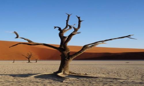 Zdjęcie NAMIBIA / Pustynia Namib / Sossusvlei / Najbardziej znany namibijski landszafcik