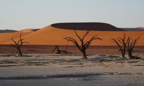 Zdjecie NAMIBIA / Pustynia Namib / Sossusvlei / W sossusvlei suchych drzewek dostatek