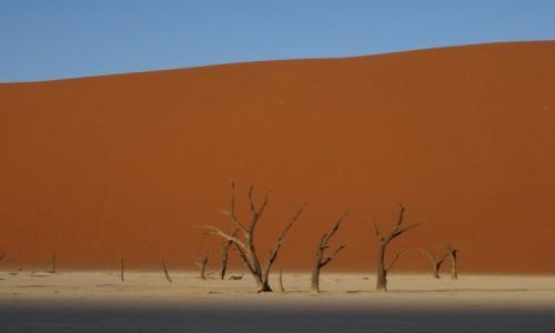 Zdjecie NAMIBIA / Pustynia Namib / Sossusvlei / W zachodzącym słońcu wydmy nabrały pomarańczowego odcienia