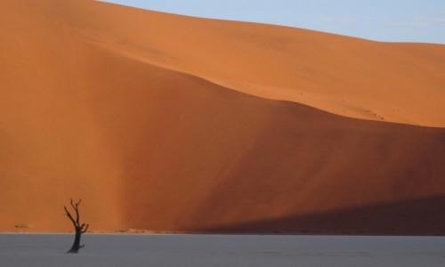 Zdjecie NAMIBIA / Pustynia Namib / Sossusvlei / Samotne martwe drzewa zmieniały nastrój krajobrazu