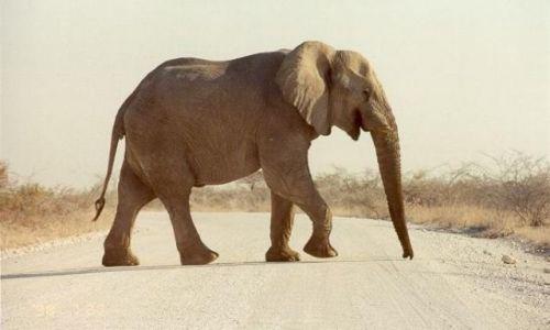 Zdjecie NAMIBIA / Namibia / Etosha Park / Etosha