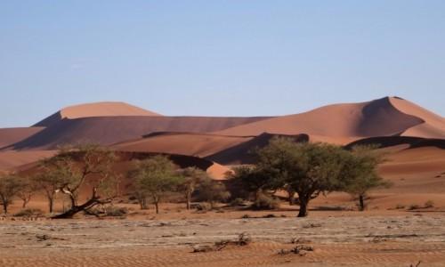 Zdjecie NAMIBIA / Park Narodowy Namib Naukluft / Namib / Dla odmiany : Czar Pustyni Namib