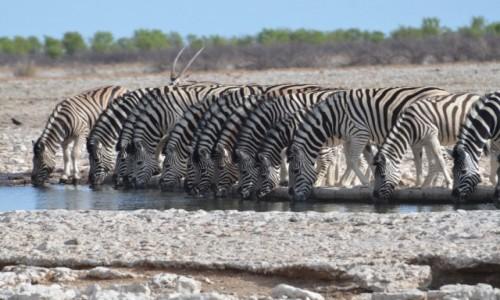 Zdjęcie NAMIBIA / Etosha / poidełko / razem