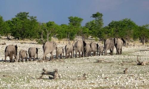 NAMIBIA / PN ETOSHA / teren parku / ... i w grzecznym rządku oddaliło się od nas