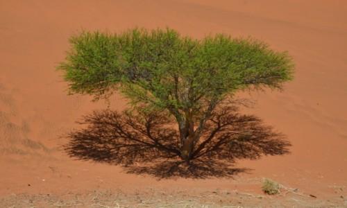 NAMIBIA / Pustynia Namib / wydma / samotnie