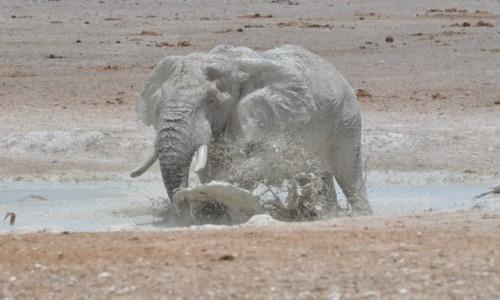 Zdjecie NAMIBIA / Park Etosha / bajorko / upał