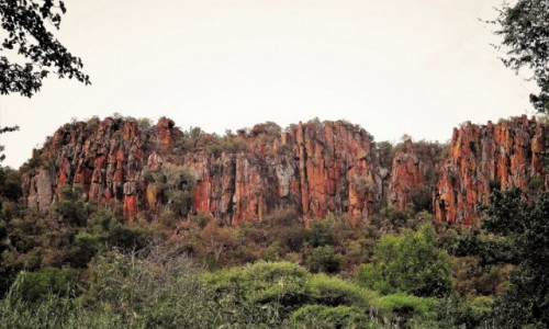 Zdjecie NAMIBIA / Park Narodowy Waterberg / U podnóża Płaskowyżu Waterberg / Kolorowy zawrót głowy - czyli to, co lubię